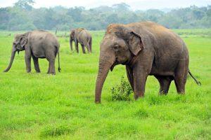 Słonie - Kerala, Indie